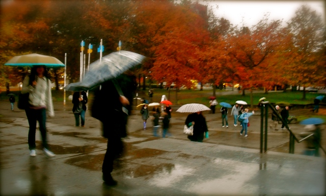 A sea of umbrellas at UBC